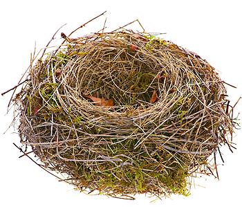 Blog2-Bird-web