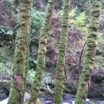 Rainbow Road Trip (6) - Blog - Margaret Hawkins